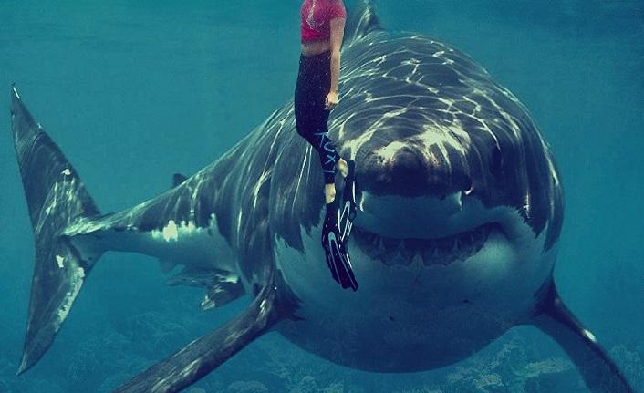 Köpekbalığı ve vatoz türleri uluslararası koruma kapsamına alınıyor