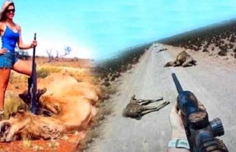 Avustralya'da yabani develer itlaf edilmeye başlandı! Keskin nişancılar öldürdükleri develerin yanında poz verdi